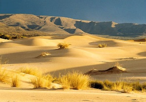 Kalahari woestijn - Namibië